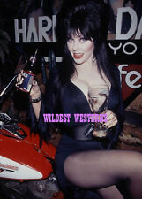 ELVIRA BEER Harley Davidson Motorcycle GIRL Busty PHOTO Mistress of the Dark HOT