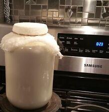Live Milk KEFIR ORGANIC GRAINS - Probiotic +Guide •1tbsp Fresh Milk Kefir Grains