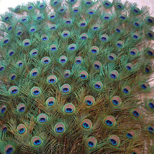 10X Green Long Artificial Peacock Tail Feather DIY Bouquet Home Decor 10-12 Inch