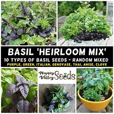 BASIL 'HEIRLOOM MIX' 100 SEEDS ALL TYPES spring summer CULINARY HERB GARDEN easy