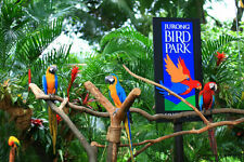 Bird Park cheap ticket with Panorail ride discount Singapore