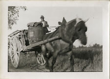 PHOTO ANCIENNE - VINTAGE SNAPSHOT - ANIMAL CHEVAL AGRICULTURE VENDANGES ATTELAGE