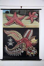 Original German Zoological starfish chart canvas poster print hagemann RRP $300