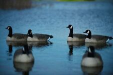 Greenhead Gear Pro Grade Active Pack Floater Canada Goose Decoys Avery Honker