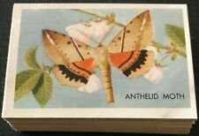 Shell AUSTRALIAN BUTTERFLIES & MOTHS Complete Set Of 60 Cards
