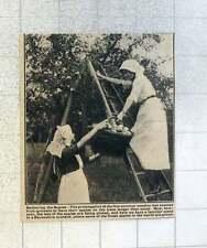 1921 Familiar Scene Devonshire Orchard, Finest Apples In The World