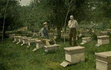 Productive Bee-Keeping by Frank C. Pellet Book on CD, Apiary, Honey, Beekeeper