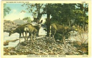 Casco ME The Deer are Plentiful Here, Scenic 1948 Greetings from Casco