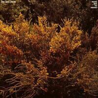 Jefre Cantu-Ledesma - Tracing Back The Radiance (NEW VINYL LP)