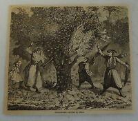 1882 magazine engraving ~ FRIGHTENING LOCUSTS IN SYRIA