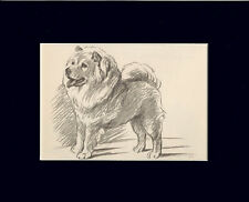"Chow-Chow Dog by Lucy Dawson 8X10"" Matted Print"
