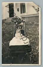 Dog Pushing Cat in Baby Carriage RPPC Cute Strange Animal Friends Photo 1912