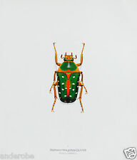 Durin Print Speckled Flower Scarab Beetle Beetles! L@K