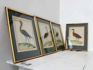 Set of Four Antique French Hand-Coloured Bird Prints