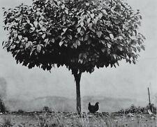 Edouard Boubat Duotone Photo Kunstdruck Art 26x36 Frankreich France Pau 1950 B&W