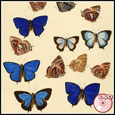 BUTTERFLIES - Old Books - J. Sepp  J. Hner Lepidoptera - COLOR PLATES - 3 DVD's