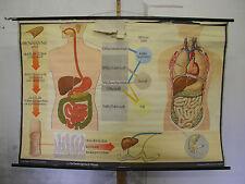 Immagine parete alimentazione dente STOMACO INTESTINO dottore 168x115cm VINTAGE DOC wall chart ~ 1960