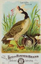 Arm & Hammer Brand Soda No.45 Handsome Canada Goose P46