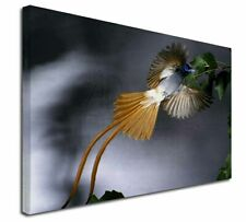 More details for humming bird x-large 30