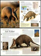 Aardvark #50 Mammals - Discovering Wildlife Fact File Fold-Out Card