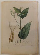 "Antilles Flore ""Maranta Indica"" De Tussac gravure couleurs 1808"