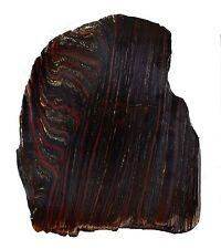 9.8INS 1174 GRAMS STROMATOLITE  BANDED TIGER IRON SLICE  FOSSIL AUSTRALIA 1