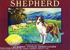 La Habra Shepherd Collie Lemon Citrus Fruit Crate Label Art Print