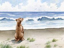 Hungarian Vizsla Dog Watercolor 8 x 10 Art Print by Artist Djr