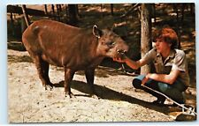 *Parke County Indiana Tapir Gobblers Knob Zoo Farm Rockville Ind Postcard B42