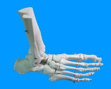 Life Size Foot Joint Anatomical Skeleton Model Human Medical Anatomy