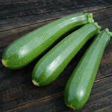 Heirloom Squash Seeds Dark Green Zucchini 30+ Seeds