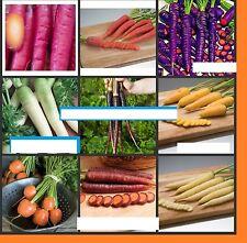 40x graines 9 divers variétés carottes jardin plant rarité LÉGUMES #102