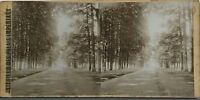 Parc A Identificare Fotografia Stereo Vintage Citrato c1900
