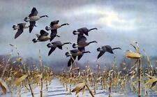 Les Kouba Nine Big Blacks Canadian Goose Print-SN  23 x 15.5