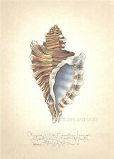 ANGULAR TRITON SEASHELL original handworked SIGNED limited edition LARGE print