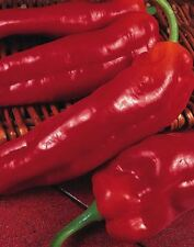 Vegetable - Pepper (Sweet) - Long Red Marconi - 40 Seeds - Economy