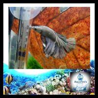 AquaTee's 20 Indian Almond Leaves Terminalia Catappa Shrimp Fish Aquarium tank