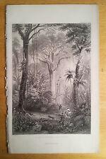 Brazilian Jungle Hunting Scene - Antique Print 1857 botanical original engraving