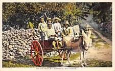 NASSAU, BAHAMAS ~ 5 NATIVE CHILDREN SEATED IN DONKEY CART ~ c. 1910-20