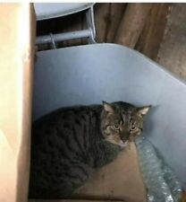 Where's Waldo? He's safe at Sandbach Animal Rescue, lucky boy! See his story x
