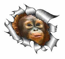 Rip Rasgado Rasgado Look De Metal Diseño Y Lindo Bebé Mono orangután Pegatina de vinilo coche