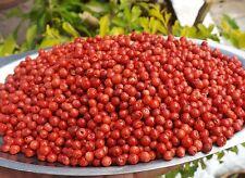100gr BAIES ROSES PREMIUM QUALITE de Madagascar poivre rouge Réunion épices fine