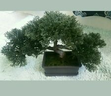 Faux Japanese Cedar Bonsai Tree Healing Meditate Budda GOD Chakra Energy Divine