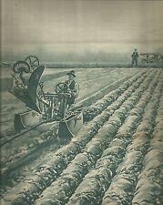 K0284 Agricoltori - Risaia - Aratro a trazione funicolare - Stampa antica