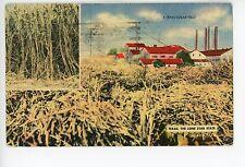 Texas Sugar Cane Field—Vintage Linen PC Farm Agriculture ca. 1947