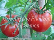 🔥 Manitoba Tomate alte Tomaten Sorte für kurze Sommer 10 frische Samen Balkon