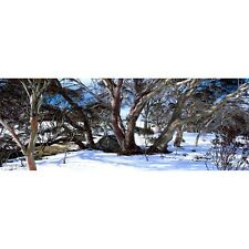Snow Gums at Perisher Valley NSW 1000 piece Jigsaw by John Temple