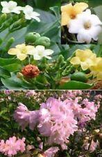 Seiten Blumen + Parfüm Bäume Set Zimmerpflanzen Pflanzen für die Wohnung blühend