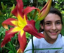 Daylily MEGATRON X RUBY SPIDER Large Huge Flowers! 10 Seeds