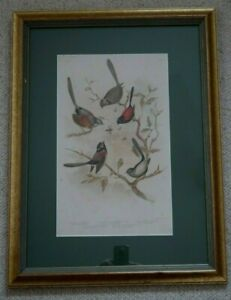 Framed Gracius BROINOWSKI Warbler BIRDS original lithograph print